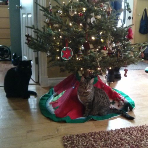 our kitties, guarding the tree